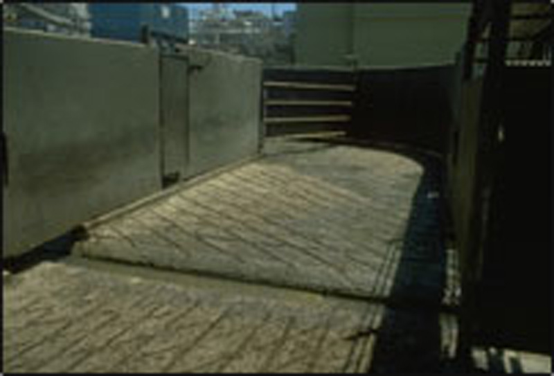 Cattle may refuse to walk on grain floors because of shadows they create.